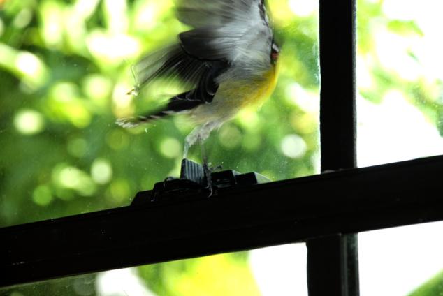 bird in my room_0150b