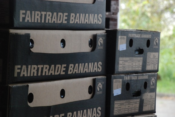 Banana_Packing_DSC_0149