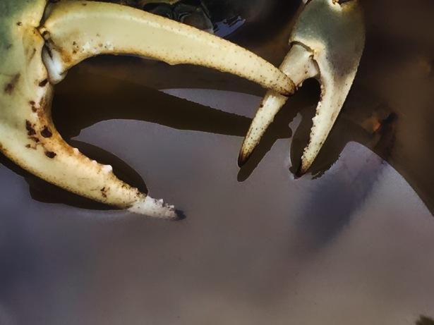 gandi claws IMG_0330